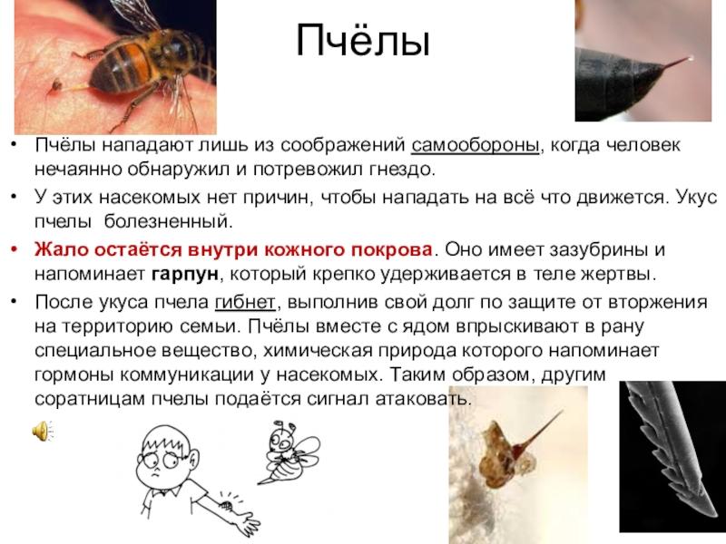 Крови укус анализ насекомых и биохимическом анализе крови пробы в норма тимоловой