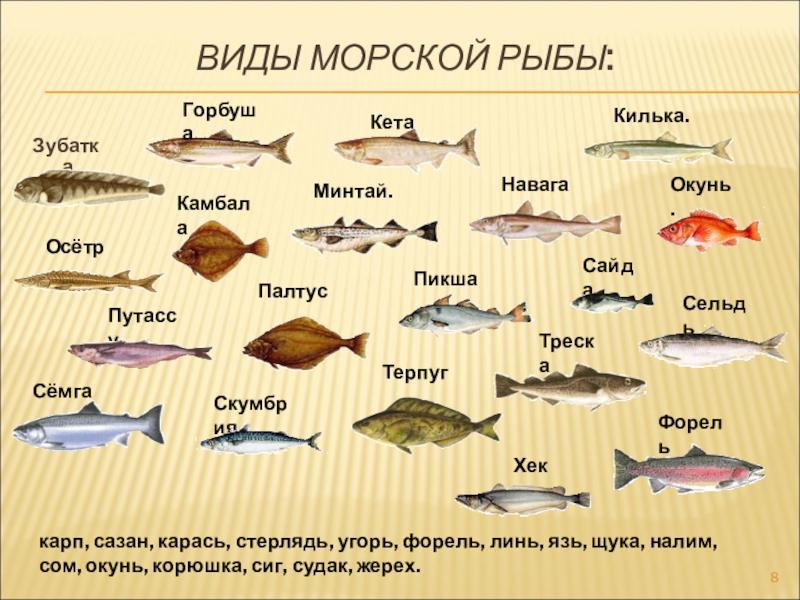 Кулинария блюда из рыбы (6 класс) доклад, проект