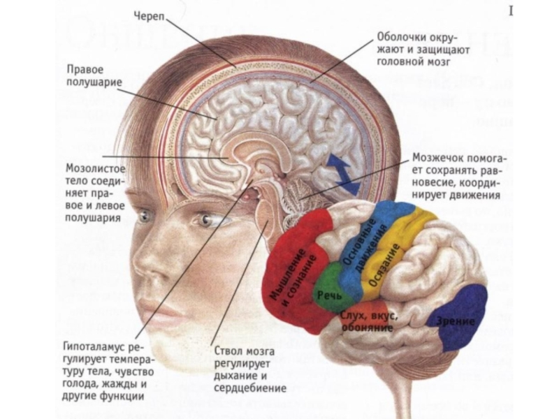 Общая структурно функциональная девушка модель работы головного мозга разработана white rabbit kiev