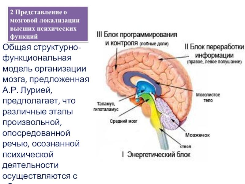 Структурно функциональная девушка модель работы мозга разработана модели социальной работы с бомжами